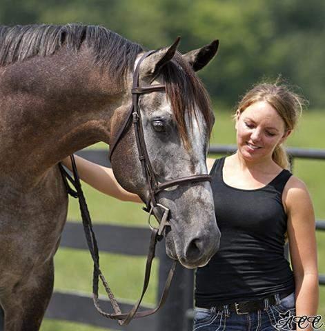 Albergatti, a beautiful gray horse