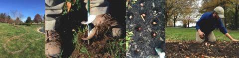 Bulb planting, 2014 Stonestreet Farm Scenics